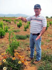 Bravo vines