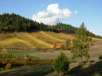 Oregon Wine 60001