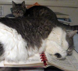 2 cats sleeping